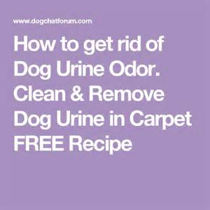 Remove Urine Smell From Carpet And Padding How To Get Rid Of Wee Smell In Carpet Carpet Vidalondon
