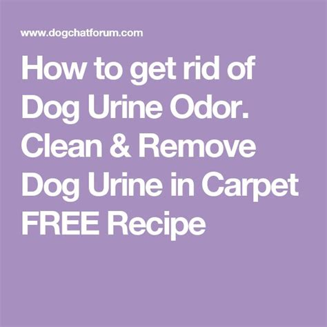 How To Get Rid Of Dog Wee Smell In Carpet   Carpet Vidalondon