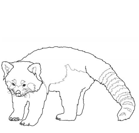 red panda coloring pages az coloring pages