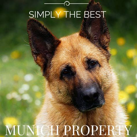 puppy realty property ihr real estate consultant als sp 252 rhund munich property