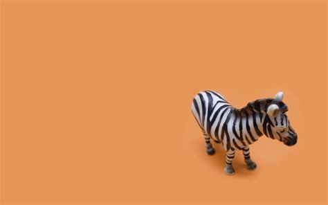 apple wallpaper zebra 1920x1200 zebra toy desktop pc and mac wallpaper