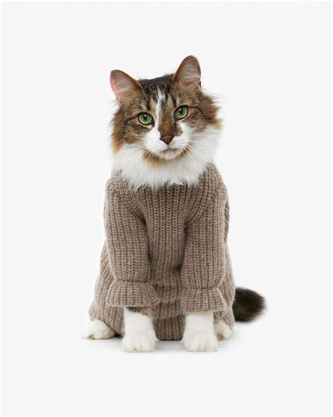 knitting pattern cat clothes sweater weather