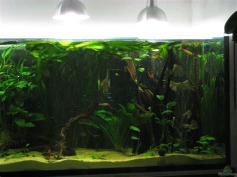 Aquarium Glas Lackieren by Aquarium Gerrit Buck Becken 9025