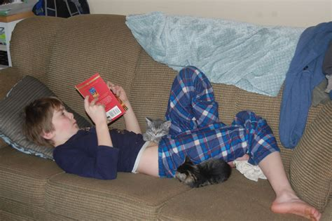 boy on couch boy reading on sofa with kittens wuppenif wuppenif