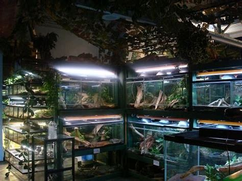 reptile rooms 227 best images about reptile room ideas on bearded enclosure indoor
