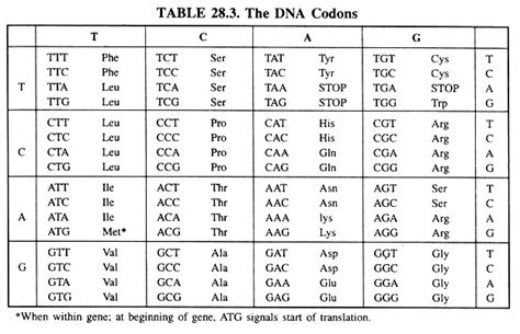 types meaning genetic code meaning types and properties