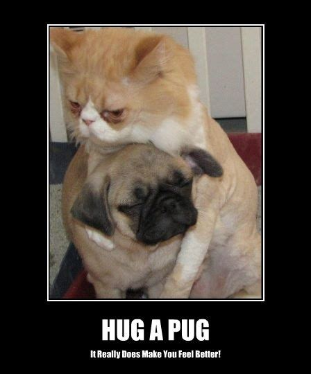 Pugs Meme - funny pug dog meme pun lol lol dog breeds picture