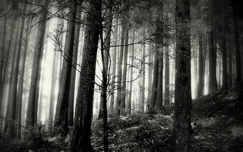 black and white woods wallpaper black and white woods wallpaper wallpapersafari