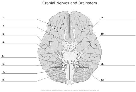 cranial nerves diagram brain anatomy quiz label geoface ace54de5578e