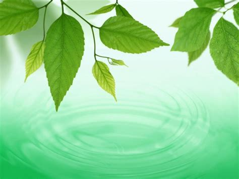 imagenes verdes en movimiento chispas fondos verdes
