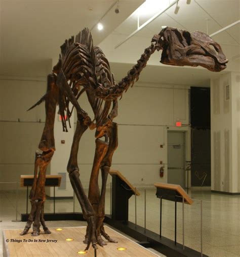 7 Things To About Bones by Hadrosaurus Foulki New Jersey State Museum Things To