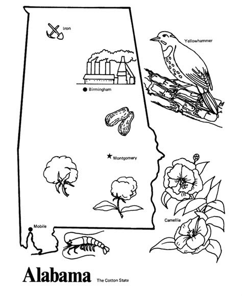alabama state colors alabama state symbols coloring pages coloring pages