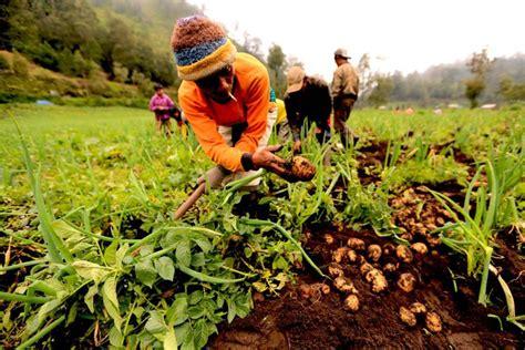Bibit Kentang ratusan petani kentang demo di kementerian perdagangan