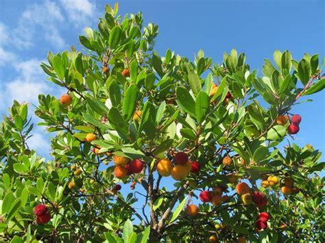 arbusti sempreverdi da giardino arbusti sempreverdi piante da giardino caratteristiche