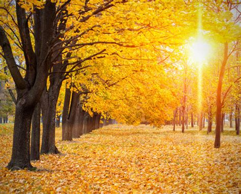 fall backgrounds   psd ai vector eps format