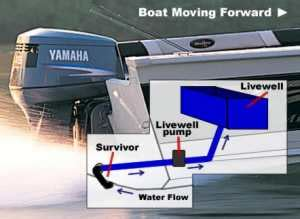 boat livewell cleaner walleyes inc home action packed adventures in walleye