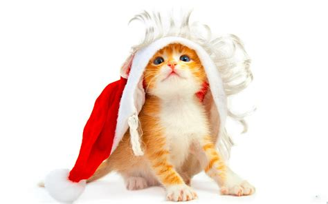 new year cat images happy new year cat wallpaper images