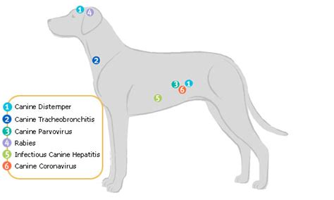 distemper for puppies canine distemper treatment