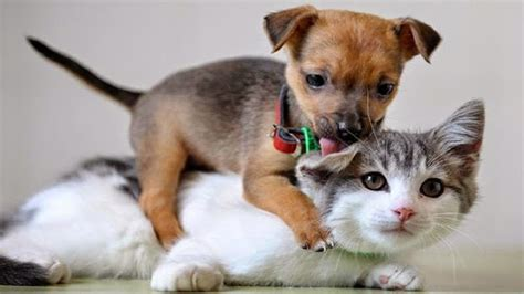 funny animal   crazy dogs  cats