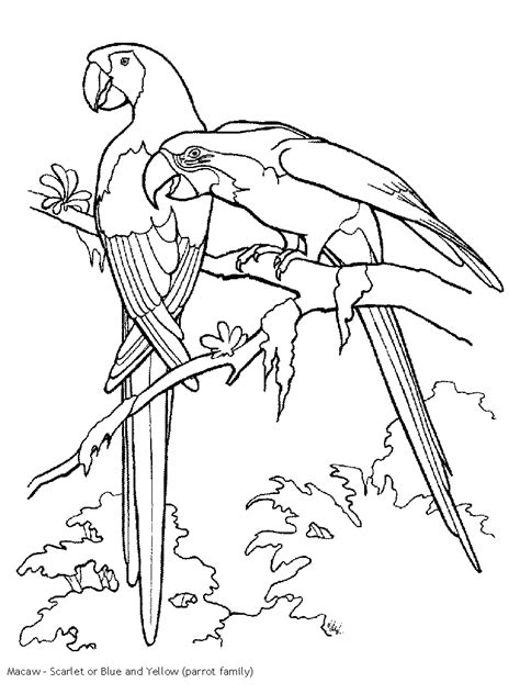 coloring pages of birds in the rainforest tucan outline rain forest coloring pages k 3 coloring