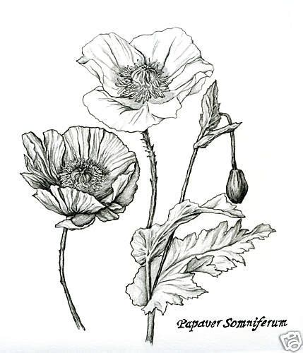 Galerry crocus flower coloring page