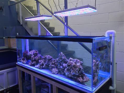 Lu Led Untuk Aquarium blue tang marine resmi dealer orphek orphek