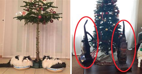 protect christmas tree from cat 15 genius who found a way to protect their trees from cats and dogs