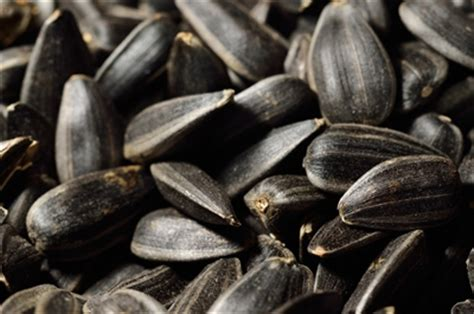 black oil sunflower seeds organic
