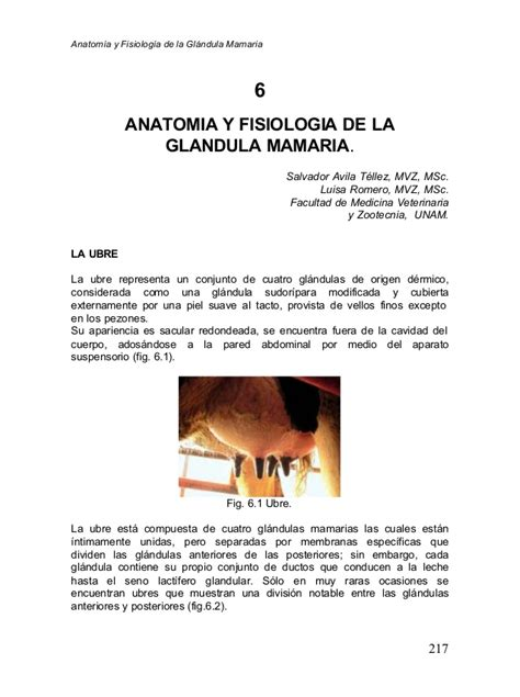 glandula submaxilar anatomia anatomia y fisiologia de la glandula mamaria