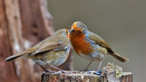 robin norfolk wildlife trust