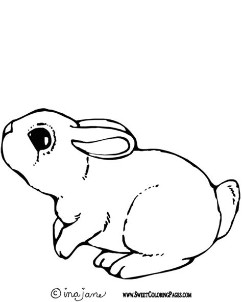 show me more bunny pic colouring pages cute pictures of