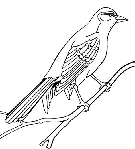 Cute Bird Coloring Pages Free Printable Pictures Bird Coloring Pages For