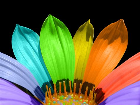 bright colors images colorful flower hd wallpaper and