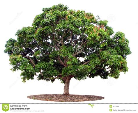 tree isolated on white royalty free stock photos image 9577538