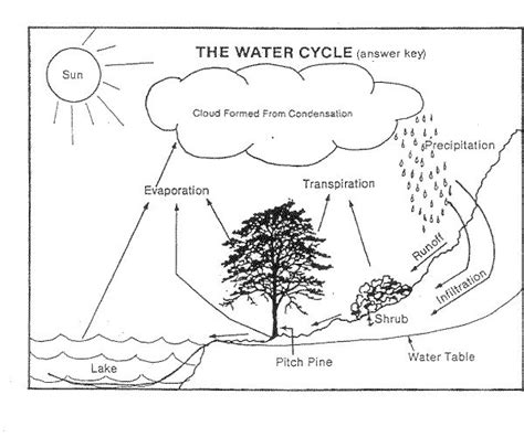 water cycle diagram worksheet water cycle worksheet search school stuff