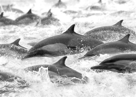 Kaos Wildlife wildlife of the channel islands national park steve
