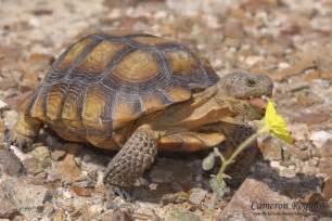 animal zoo life tortoise pet tortoise tortoise trust baby