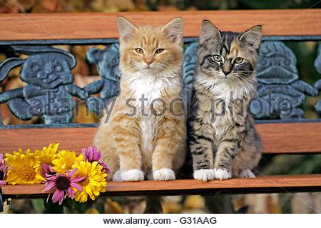 how to stop cats jumping on benches two cats on a bench stock photo royalty free image