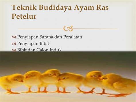 Bibit Ayam Petelur Tangerang industri pembibitan ayam ras