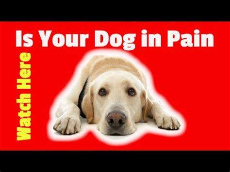 otc meds for dogs medication for dogs the counter