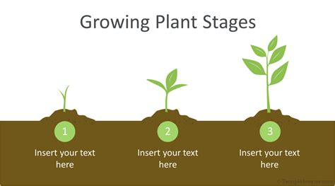 Growing Plant Infographic Powerpoint Template Templateswise Com Plant Powerpoint Templates Free