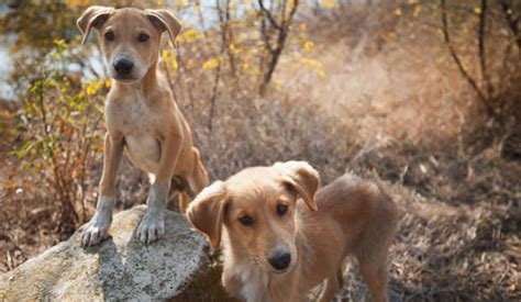 types of purebred dogs purebred vs mixed breed dogs which is right for you