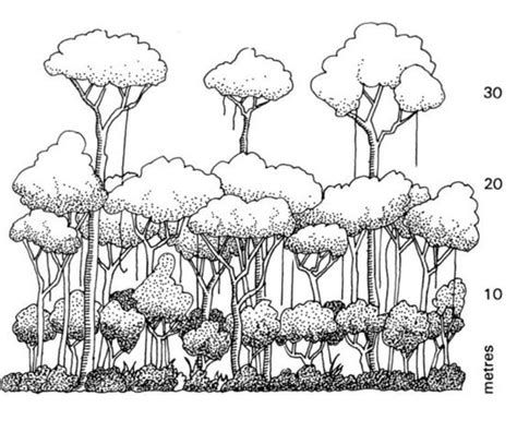rainforest canopy coloring page rainforest layers the rainforest layers funny pictures