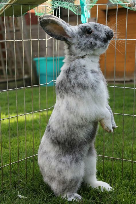 how to your to stand on hind legs 17 best images about a hutch is not enough on a bunny rescue rabbit and