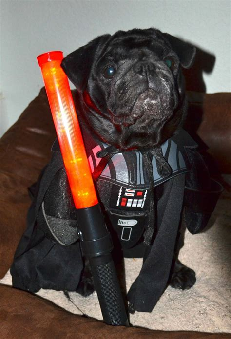 darth vader pug 56 best dogs in costume images on animals costumes and dogs
