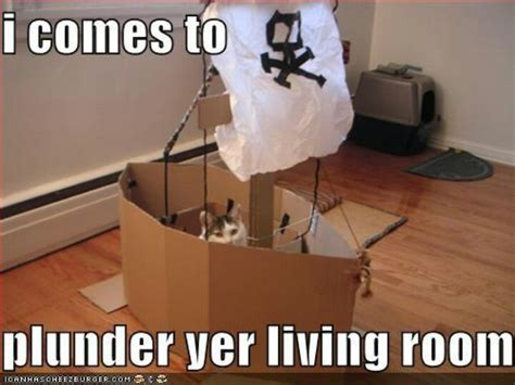 Pirate Memes - arrr i comes to plunder yer living room pirate cat
