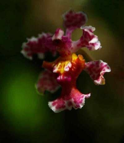 Amazonas Regenwald Pflanzen by Die Besten 25 Regenwald Pflanzen Ideen Auf