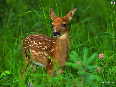 deer images free deers hd wallpaper 3