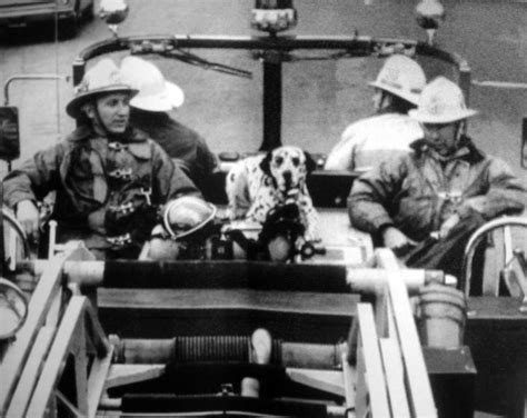 fire station dog house fire station dog black and white fire photography pinterest