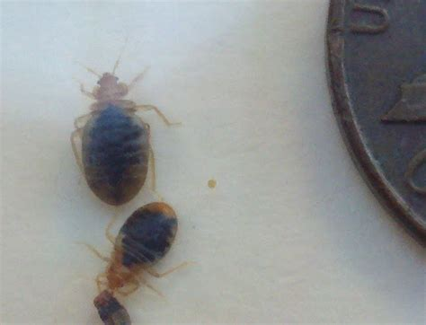 bed bug exterminator nj bed bugs pest control fairfield clifton wayne nj